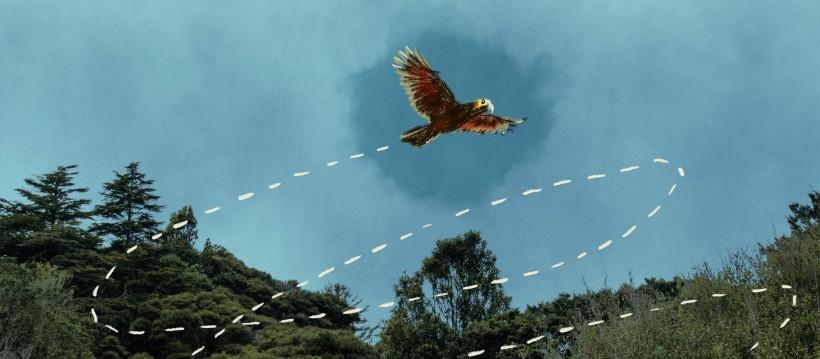 Kaia the Kaka in flight